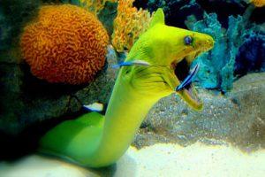 duiken Kaapverdië